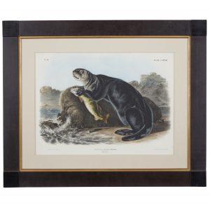 J.W. Audubon otter illustration