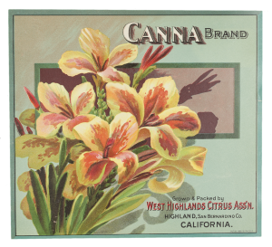 Canna brand fruit label